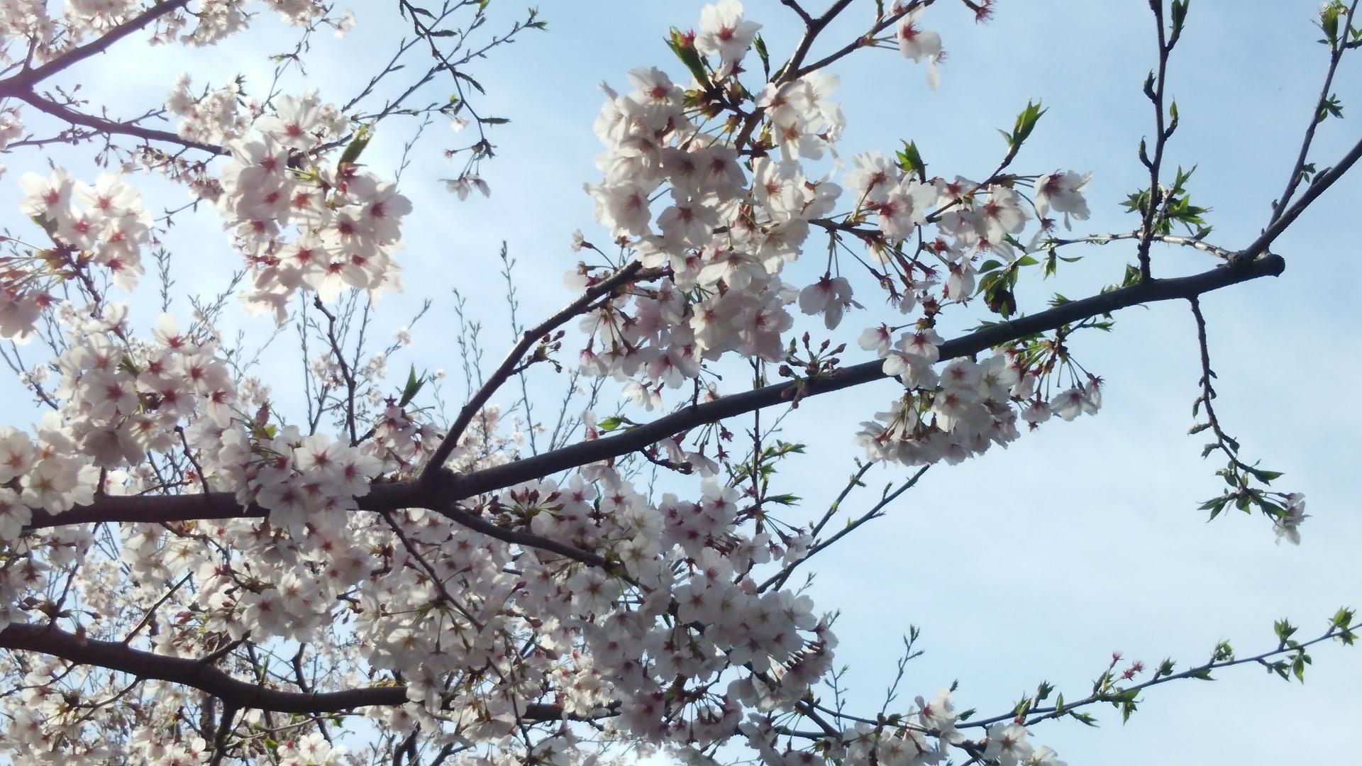どうして新学年は4月に始まるの?(1)
